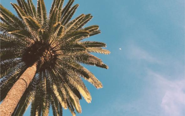 Image of palm tree and sky